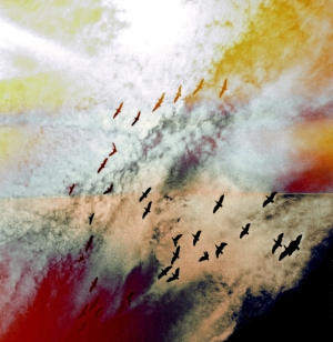 birds-1a.jpg