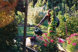 Ruth - watering plants in her allotment.