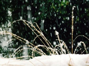 Grass and snow, low