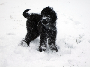 Susanne's puppy