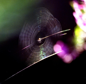Spider, 3