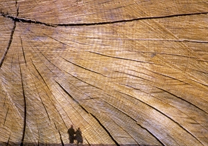 Couple shadow series, 3a small