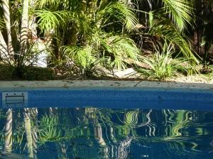 the garden pool