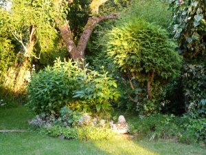Late sun rays in my garden.