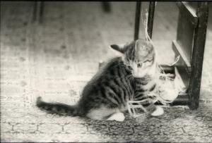Cat, Amber136