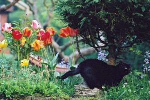 Cat, Jetty and Tulips - lower