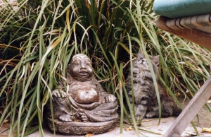 Cat, Suzuki with Buddha, bliss - Copy