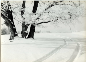 Snow-tracks, 3