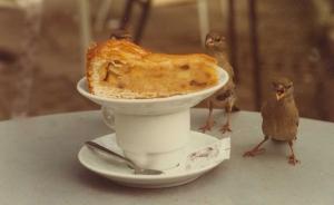 birds-and-cake